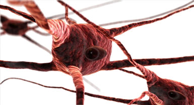 myelin sheath nerves